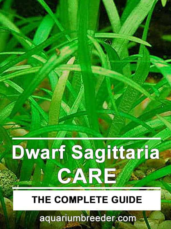 Dwarf Sagittaria Care Guide – Planting, Growing, and Propagation
