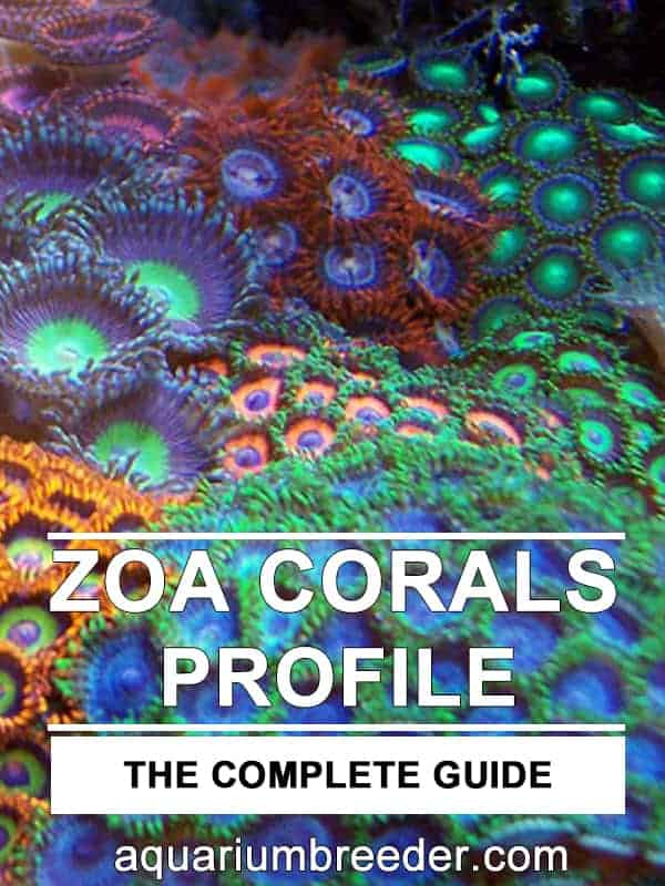 How to Care for Zoanthid Corals pinterest