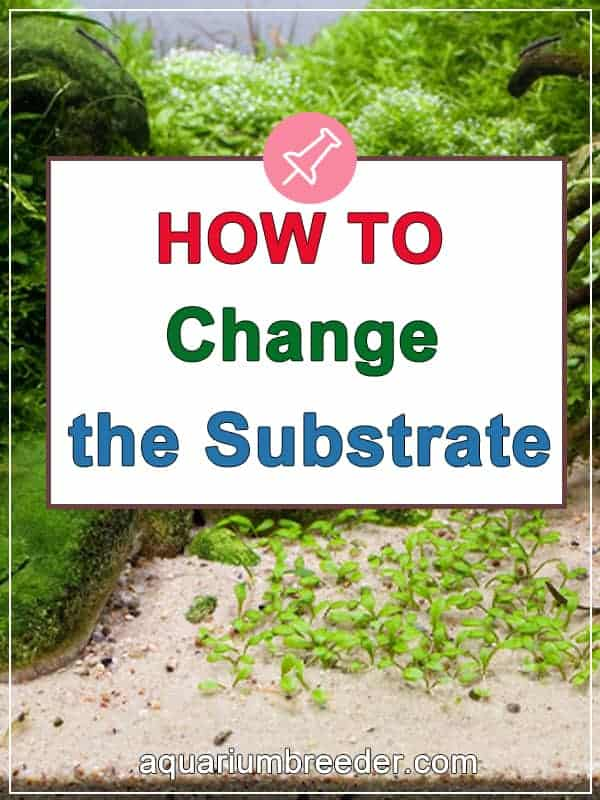 How to Change the Substrate in the Tank pinterest