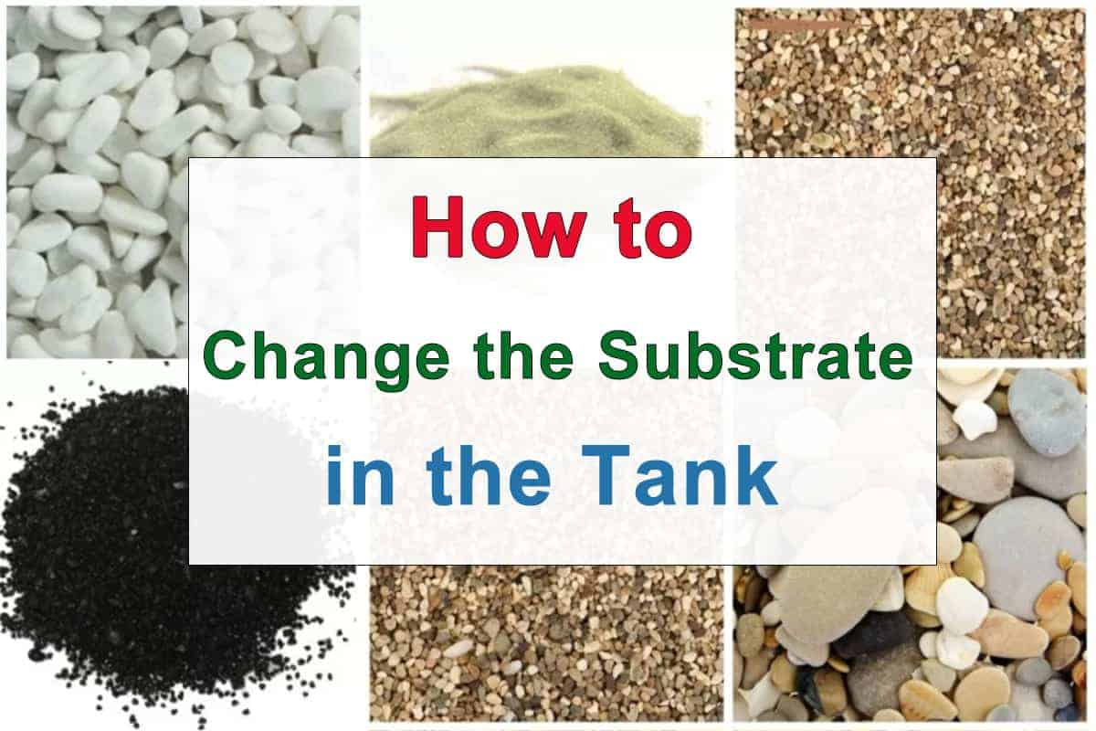 How to Change the Substrate in the Tank