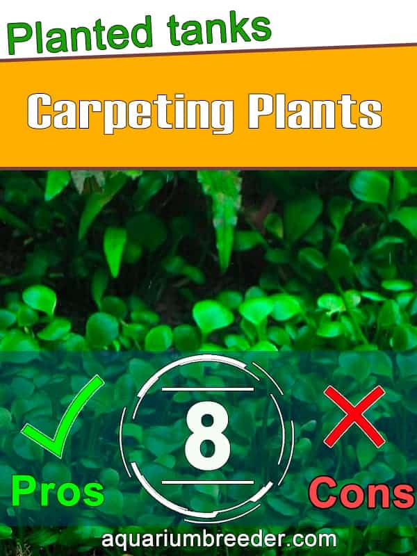 Top 8 Carpeting Plants for Planted Tanks pinterest