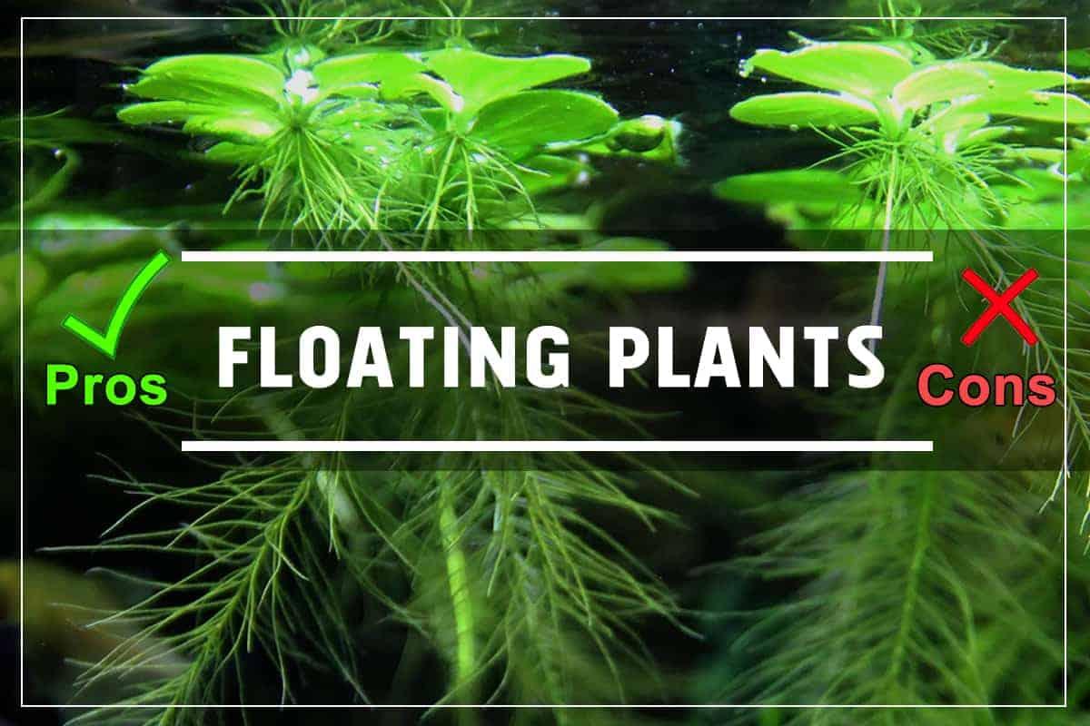 Aquarium Floating Plants. Pros and Cons