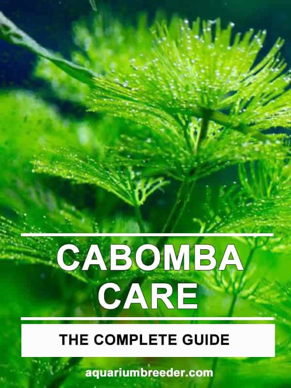 Cabomba Care Guide – Planting, Growing, and Propagation pinterest