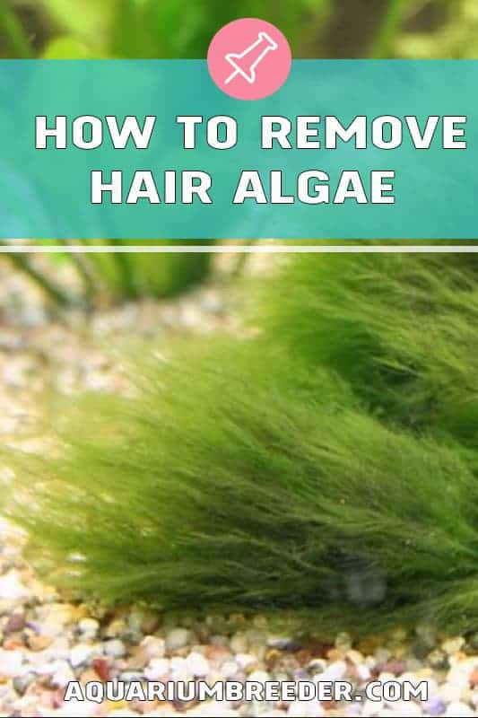 How to Remove Hair Algae in Aquariums pinterest
