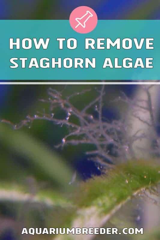 How to Remove Staghorn Algae in Aquariums pinterest