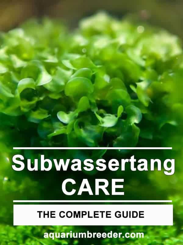 Subwassertang Care Guide – Planting, Growing, and Propagation
