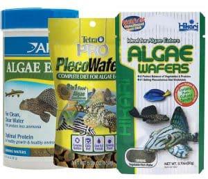 Algae wafers for Albino Bristlenose pleco