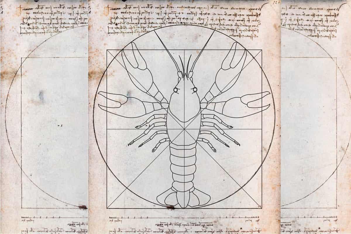 Crayfish anatomy Da Vinci