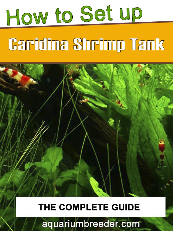 How to Set Up a Caridina Shrimp Tank pinterest