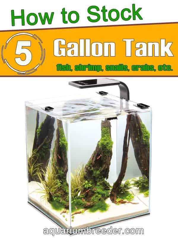Stocking 5 gallon tank with fish and Invertebrates pinterest