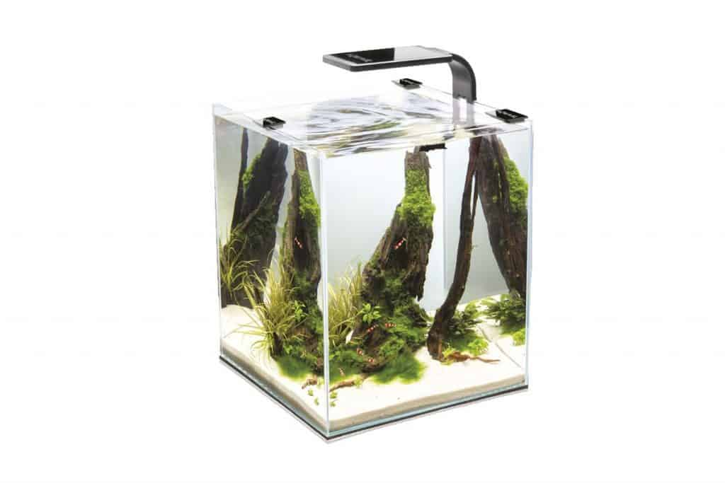Best Ways to Stock a Five-Gallon Fish Tank For Beginners