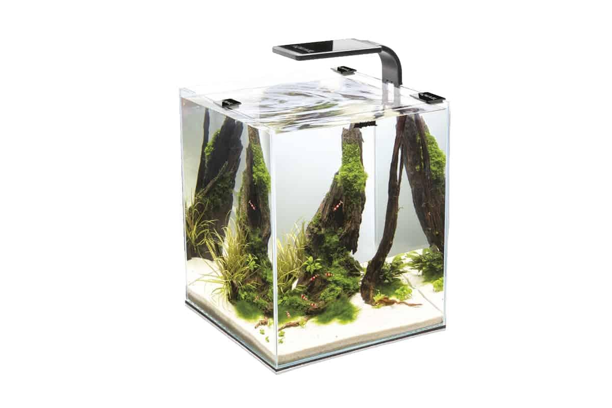 Stocking 5 gallon tank. Fish and Invertebrates