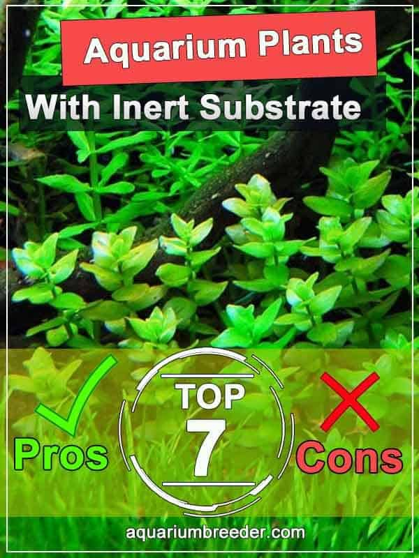 Top 7 Aquarium Plants That Grow Tanks with Gravel or Sand Pros and Cons pinterest
