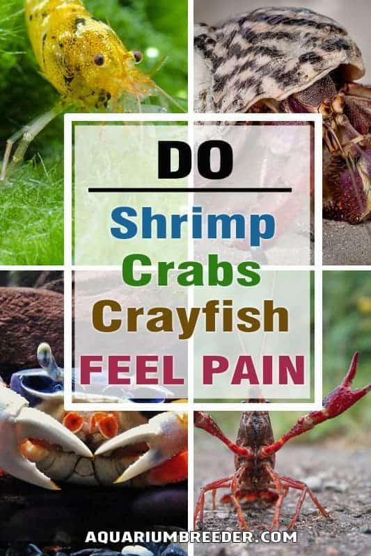 Do Crabs, Crayfish or Shrimp Feel Pain pinterest