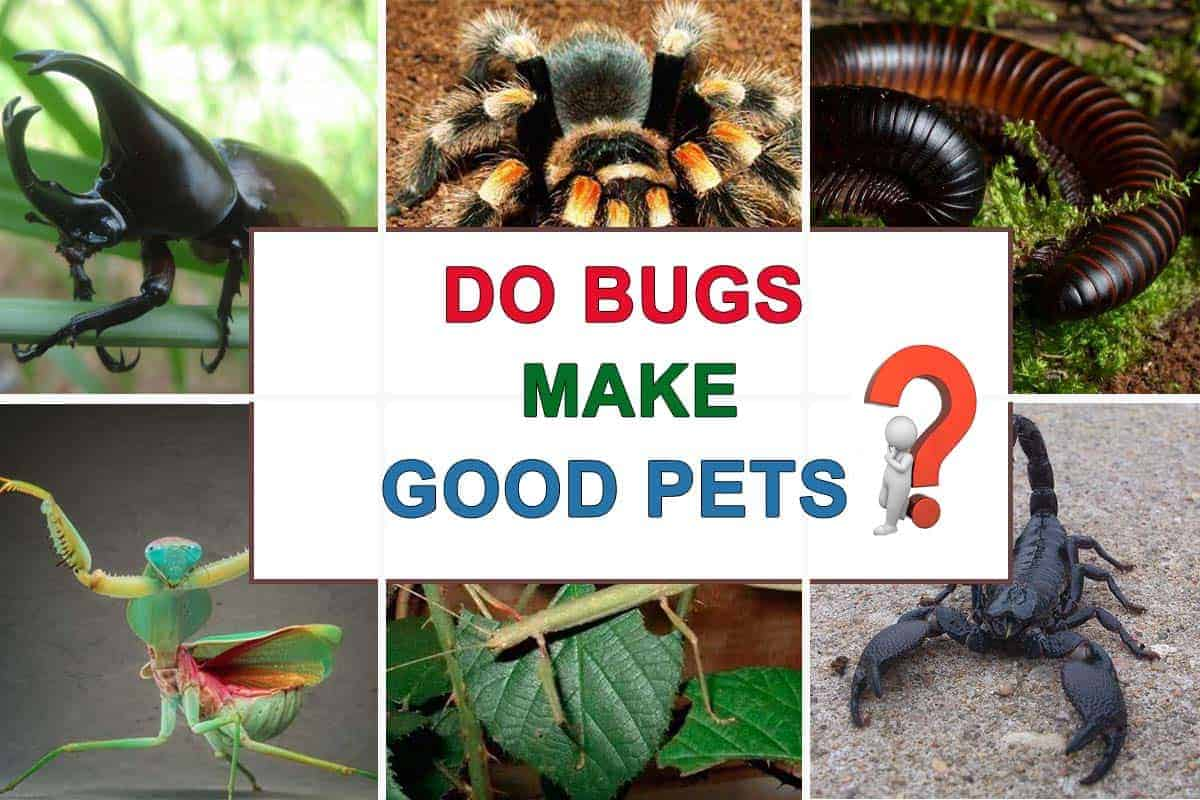 Do Bugs Make Good Pets