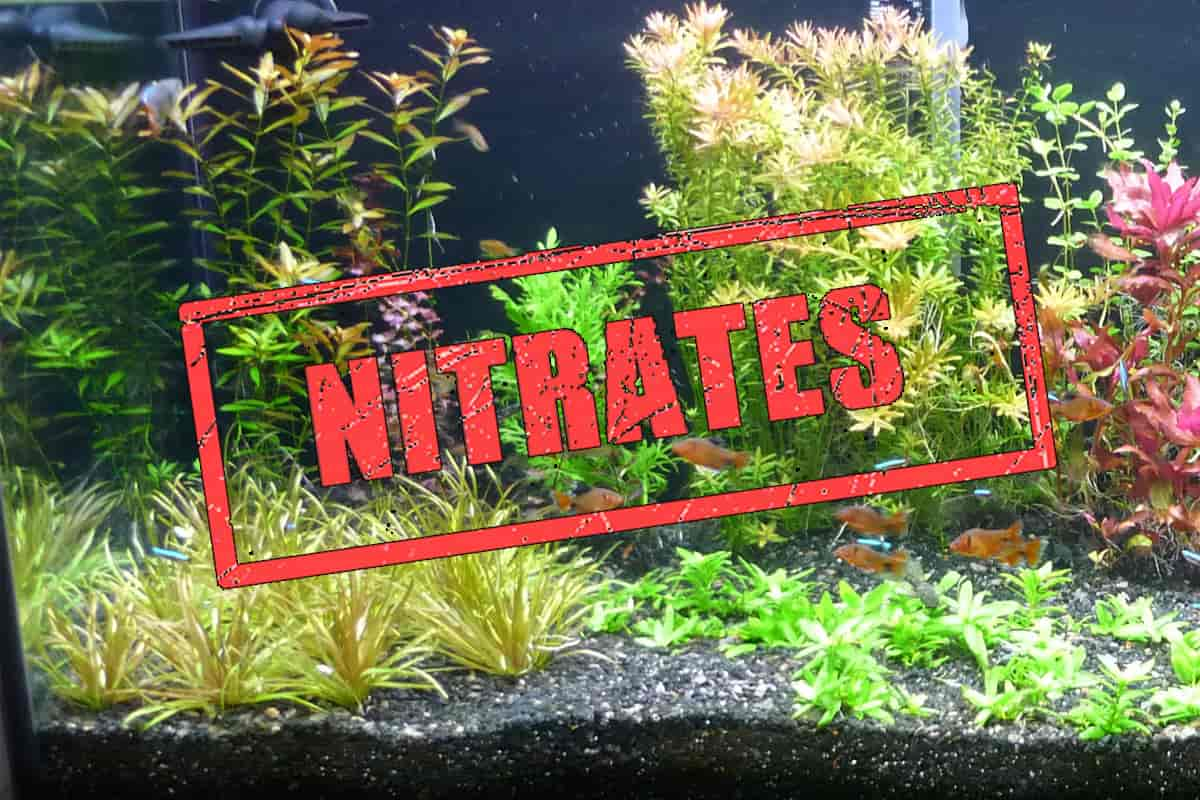 Everything about Nitrates in Planted Tanks