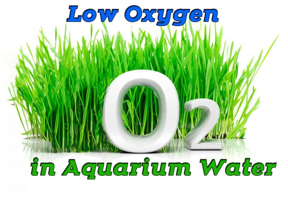 Low Oxygen in Aquarium Water