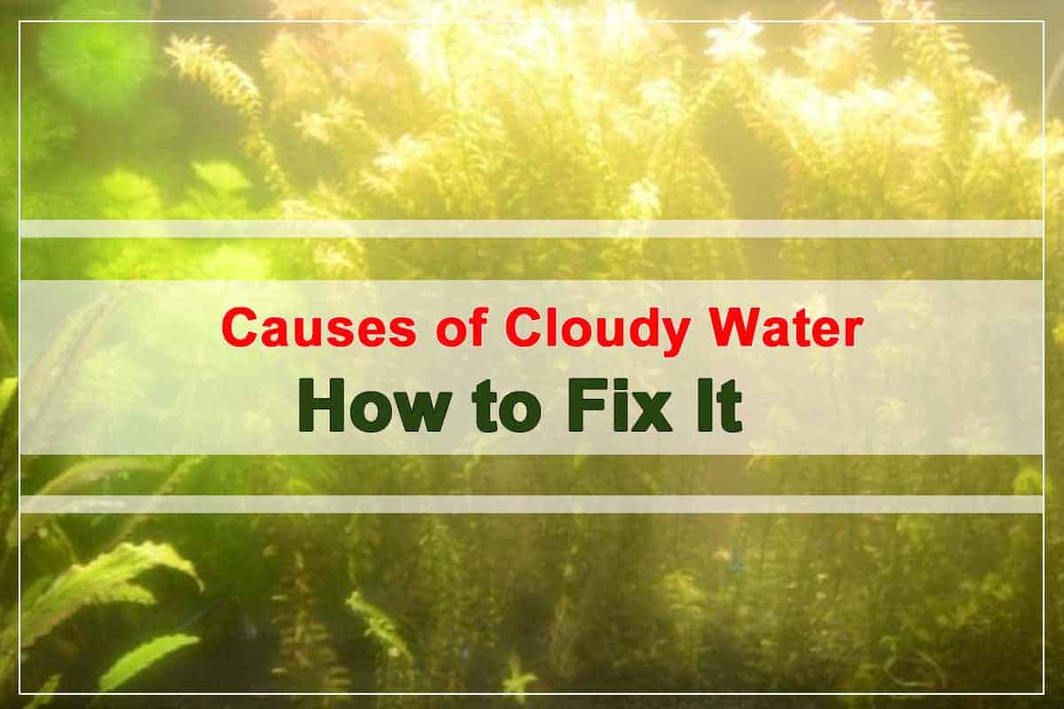 What Causes Cloudy White Aquarium Water How to fix it