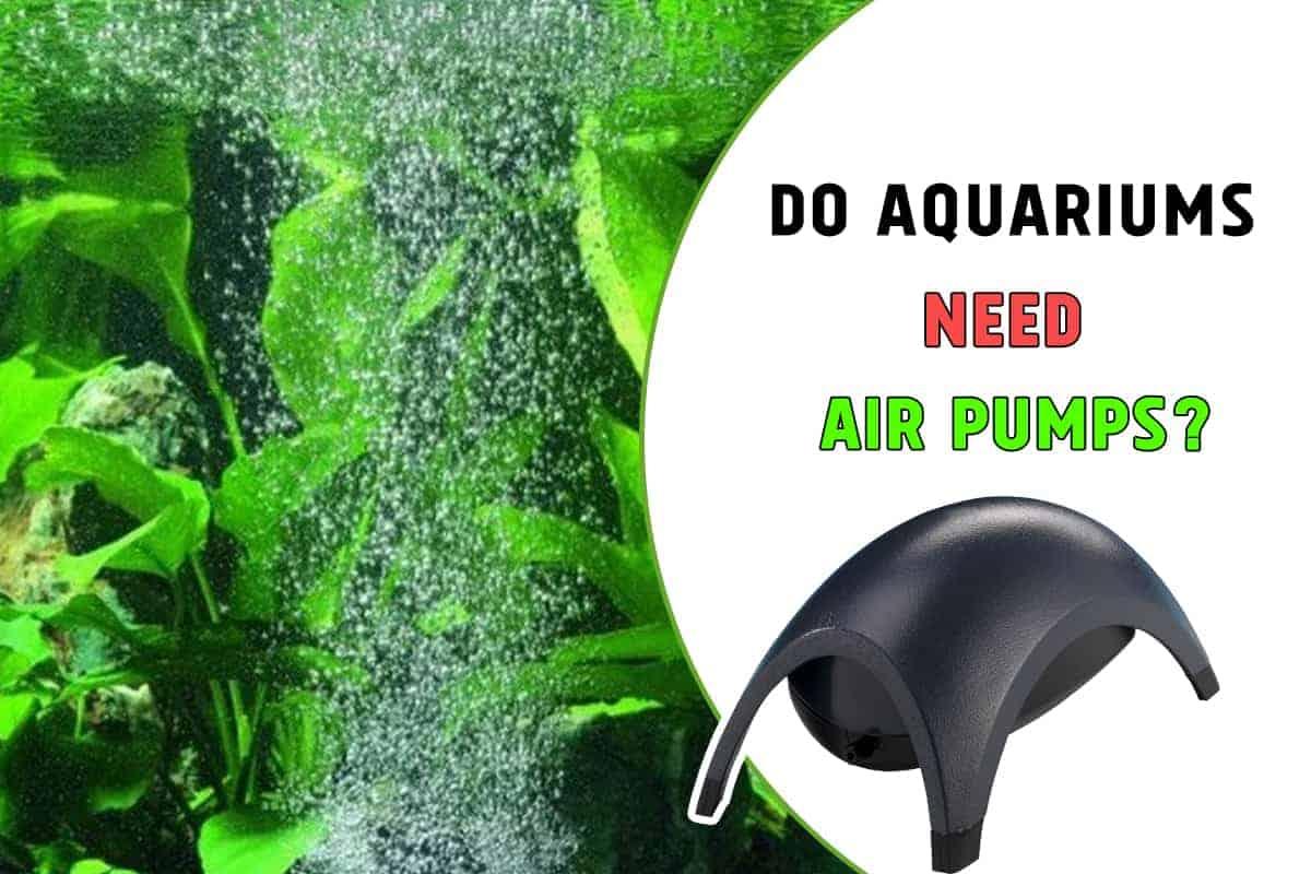 Do Aquariums Need Air Pumps