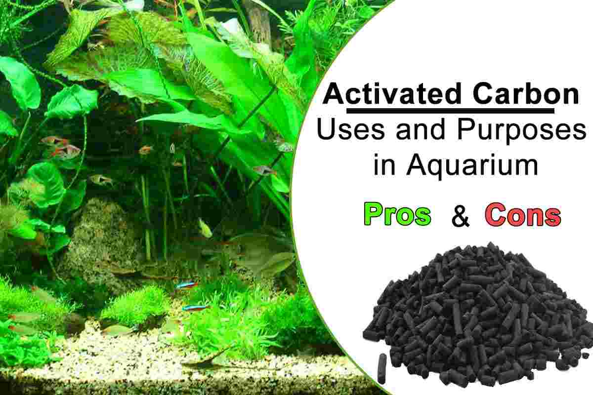 Everything about Aquarium Activated Carbon