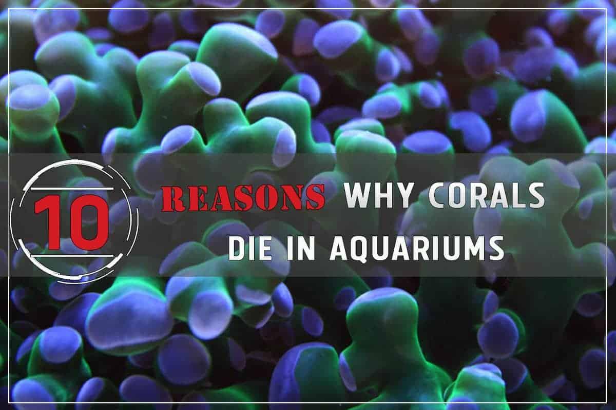 10 Reasons Why Corals Die In Aquariums