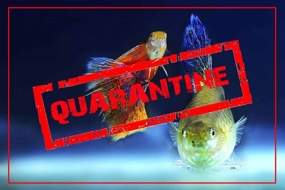 How To Setup an Easy Quarantine Tank