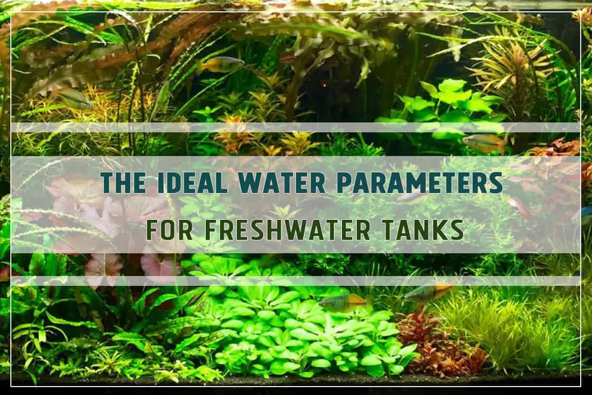 The Ideal Water Parameters for Fish and Shrimp Keeping (Freshwater Tanks)