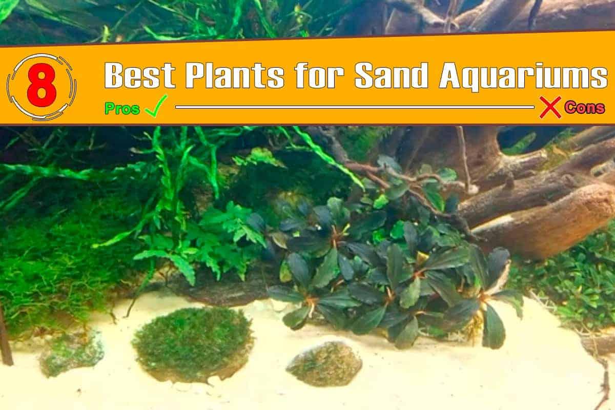 Top 8 Plants for Sand Aquariums