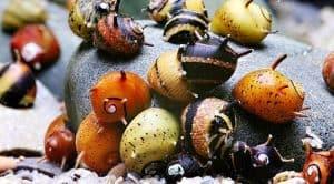 Szarvas Nerite csiga - Részletes útmutató a különböző fajok gondozásáról, étrendjéről és tenyésztéséről