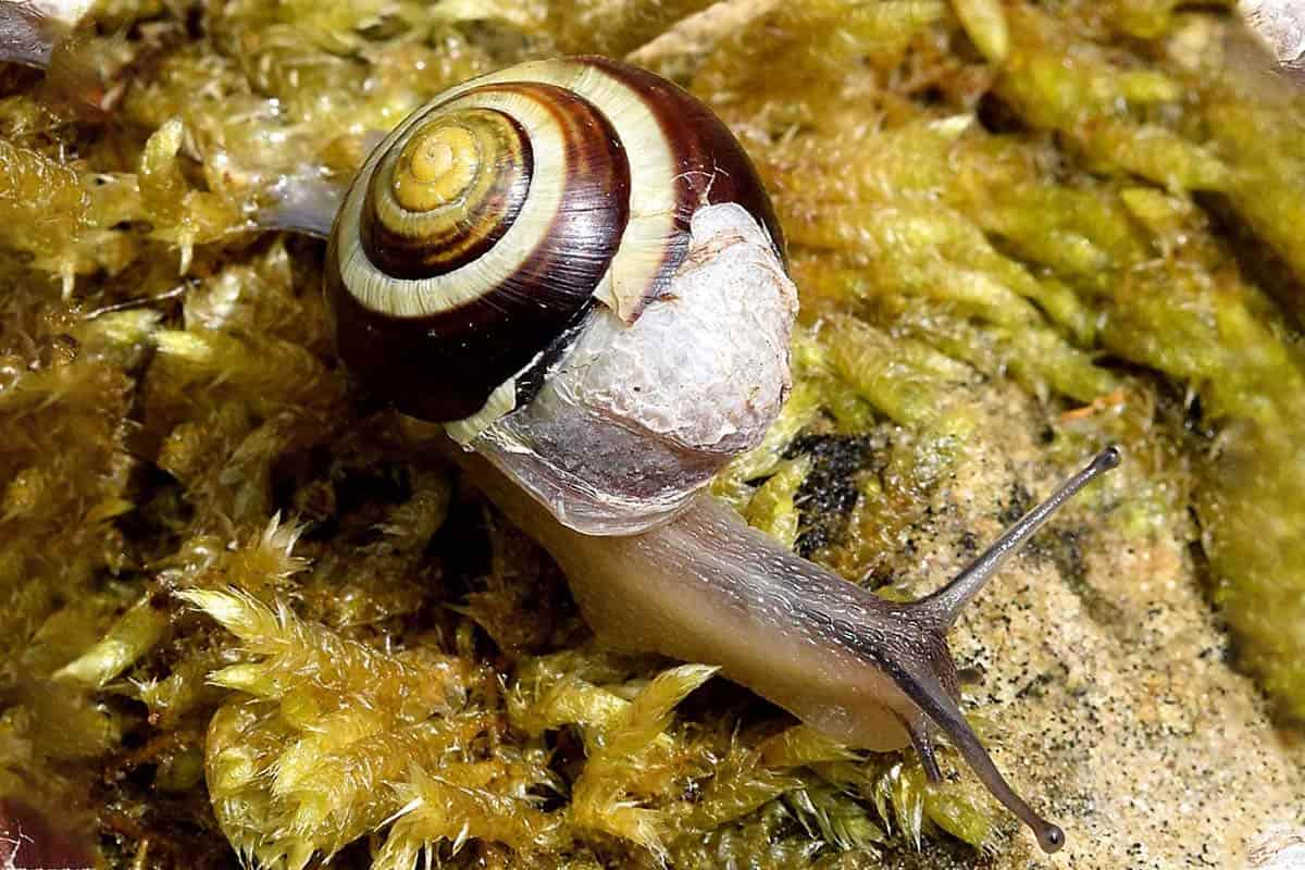 Snails and Shell Problems. Causes and How to Fix main