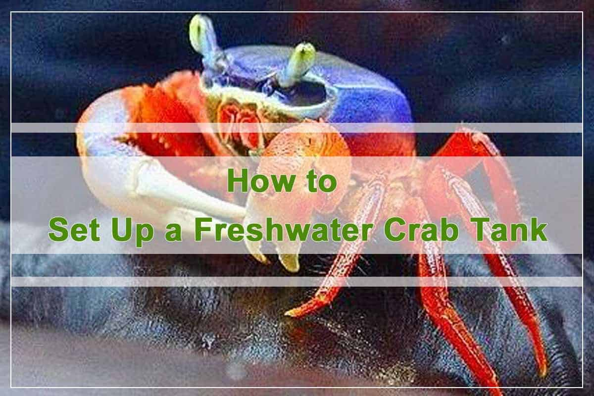 How to Set Up a Freshwater Crab Tank