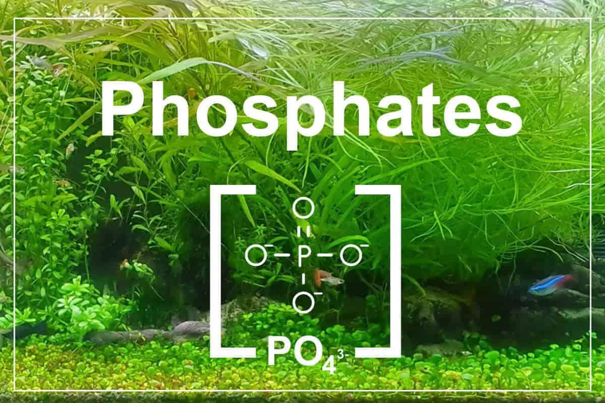 Phosphates in Freshwater Tanks