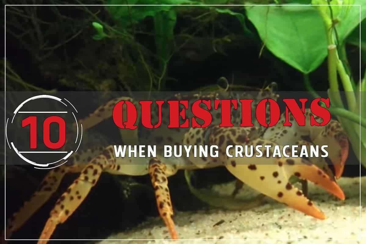 10 Questions to Ask When Buying Aquarium pet Crustaceans