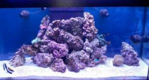 How To Set Up A Saltwater Aquarium - rocks
