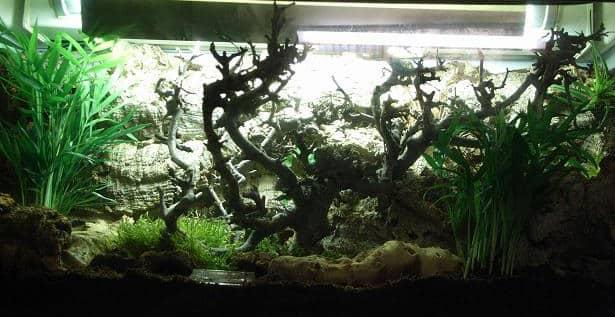 Marble Crab (Metasesarma obesum) – Detailed Guide Care, Diet, and Breeding enclosure