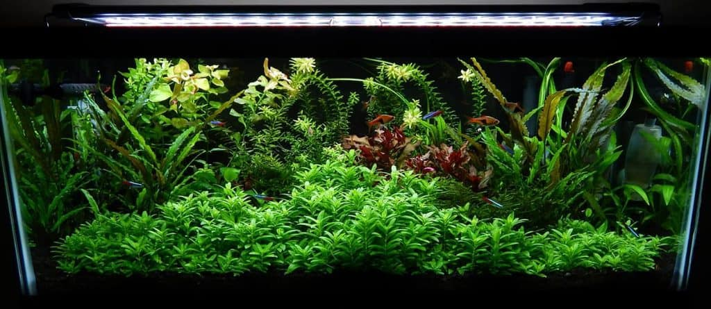 Staurogyne Repens Care Guide – Planting, Growing, and Propagation