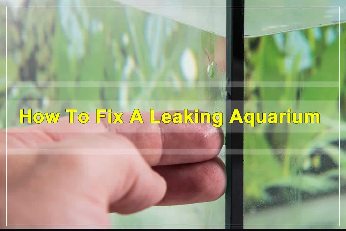 How To Fix A Leaking Aquarium With And Without Draining