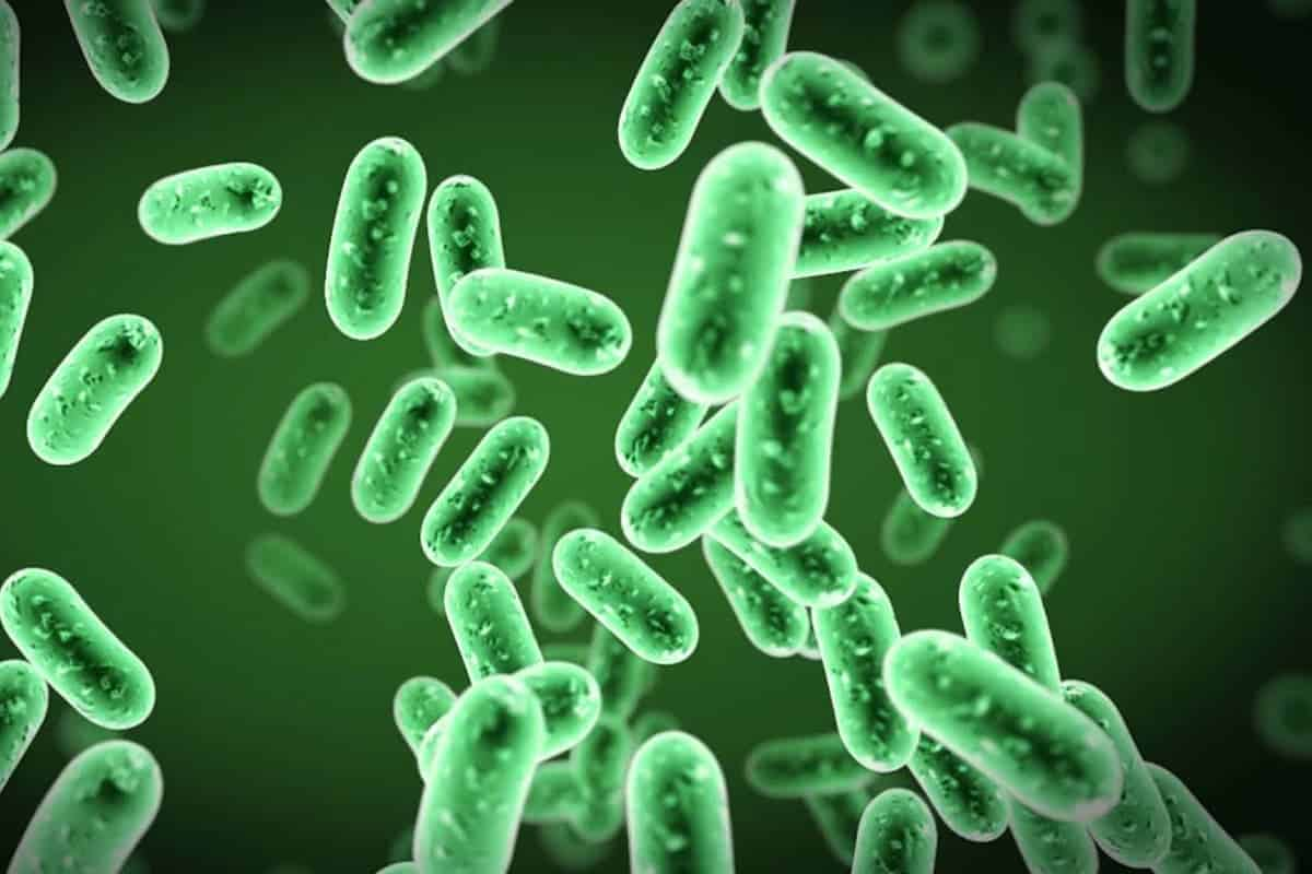 Everything about Beneficial Bacteria in Aquariums