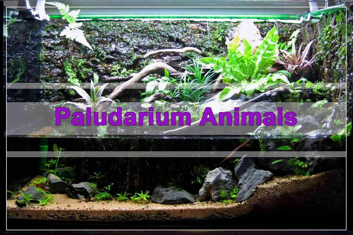 Paludarium Animals