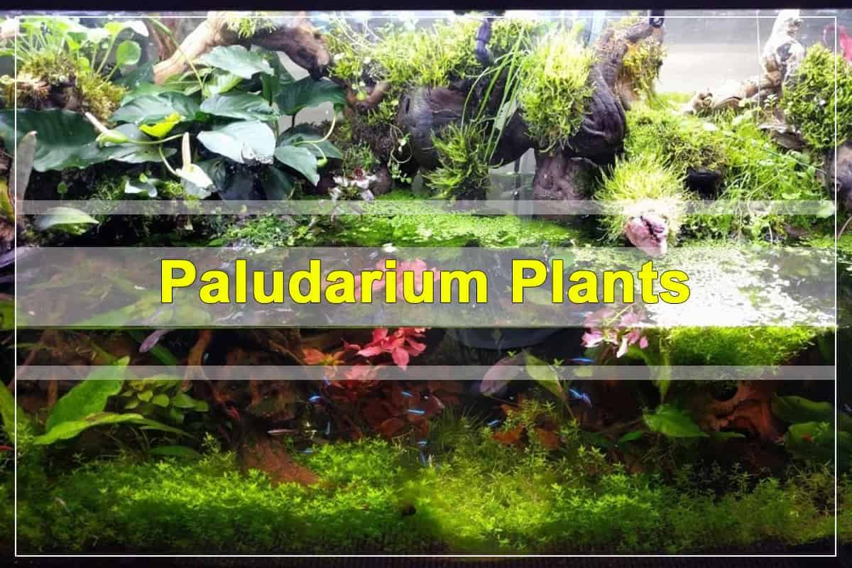 Paludarium Plants