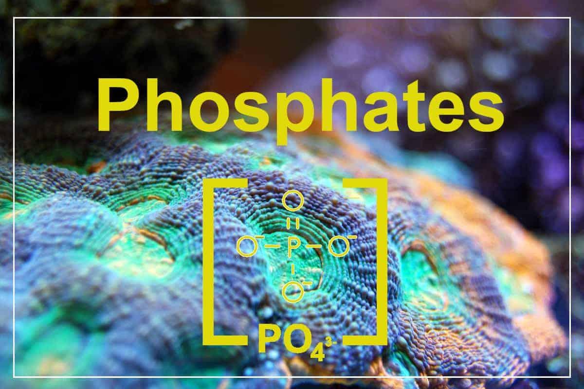 Phosphates in Reef Tanks