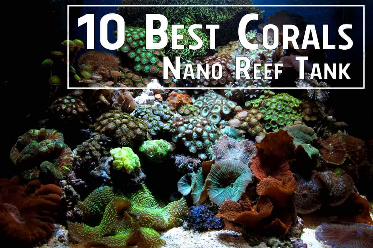 10 Best Corals for a Nano Reef Tank