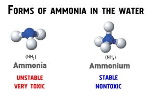 Ammonia in Shrimp Tanks - forms of ammonia