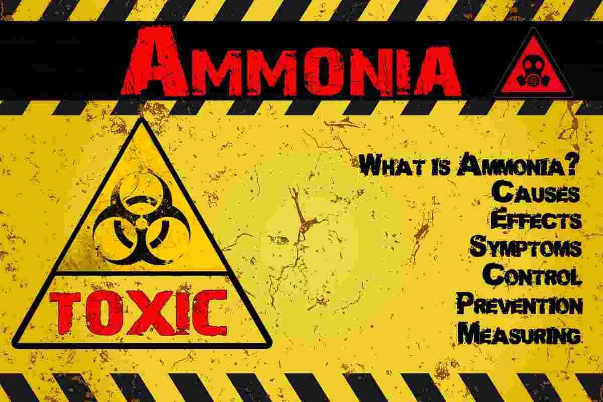 Ammonia in Shrimp Tanks