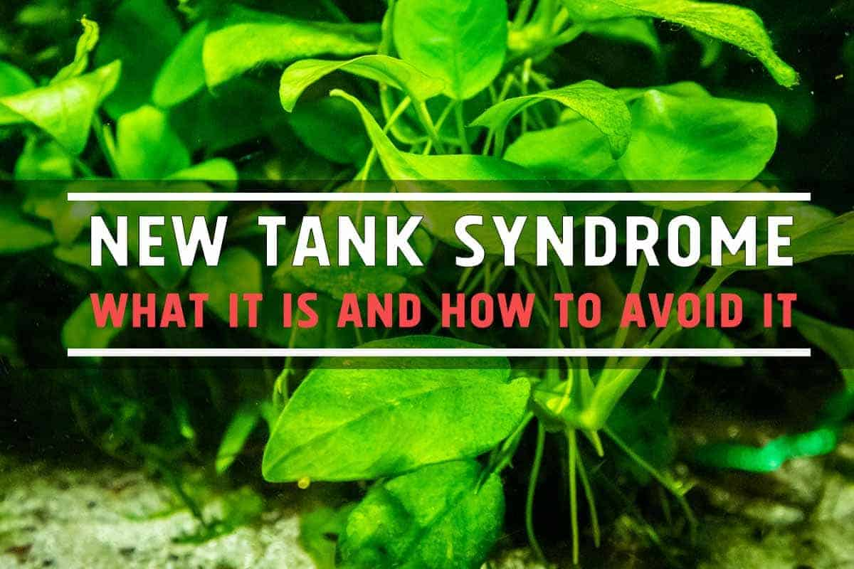New Tank Syndrome - What It Is and How to Avoid It