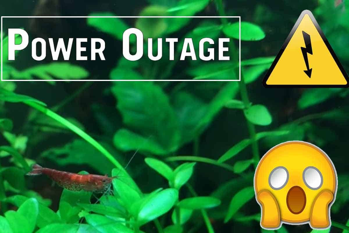 Power Outage in Shrimp and Fish Tanks