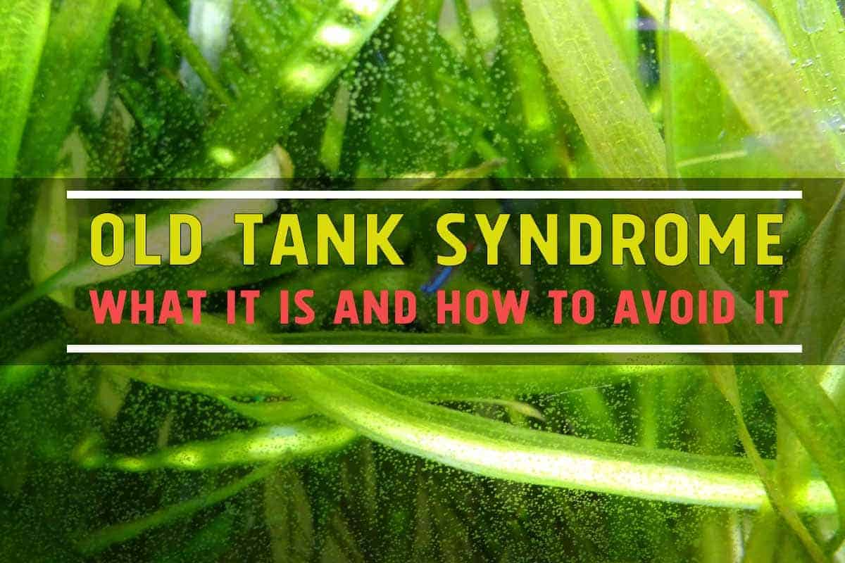 Old Tank Syndrome - What It Is and How to Avoid It