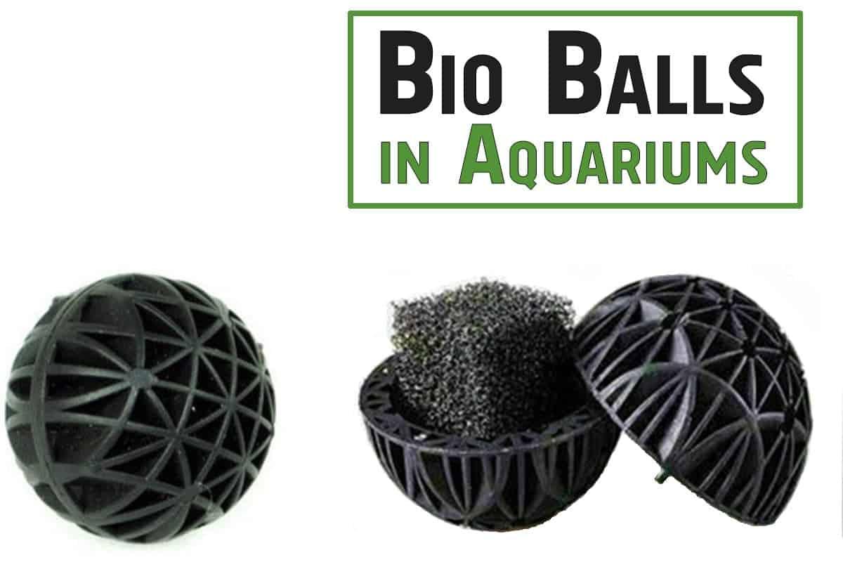 Bio Balls in Aquariums