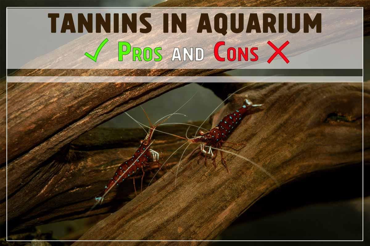 How Tannins Affect Aquarium. Pros and Cons.