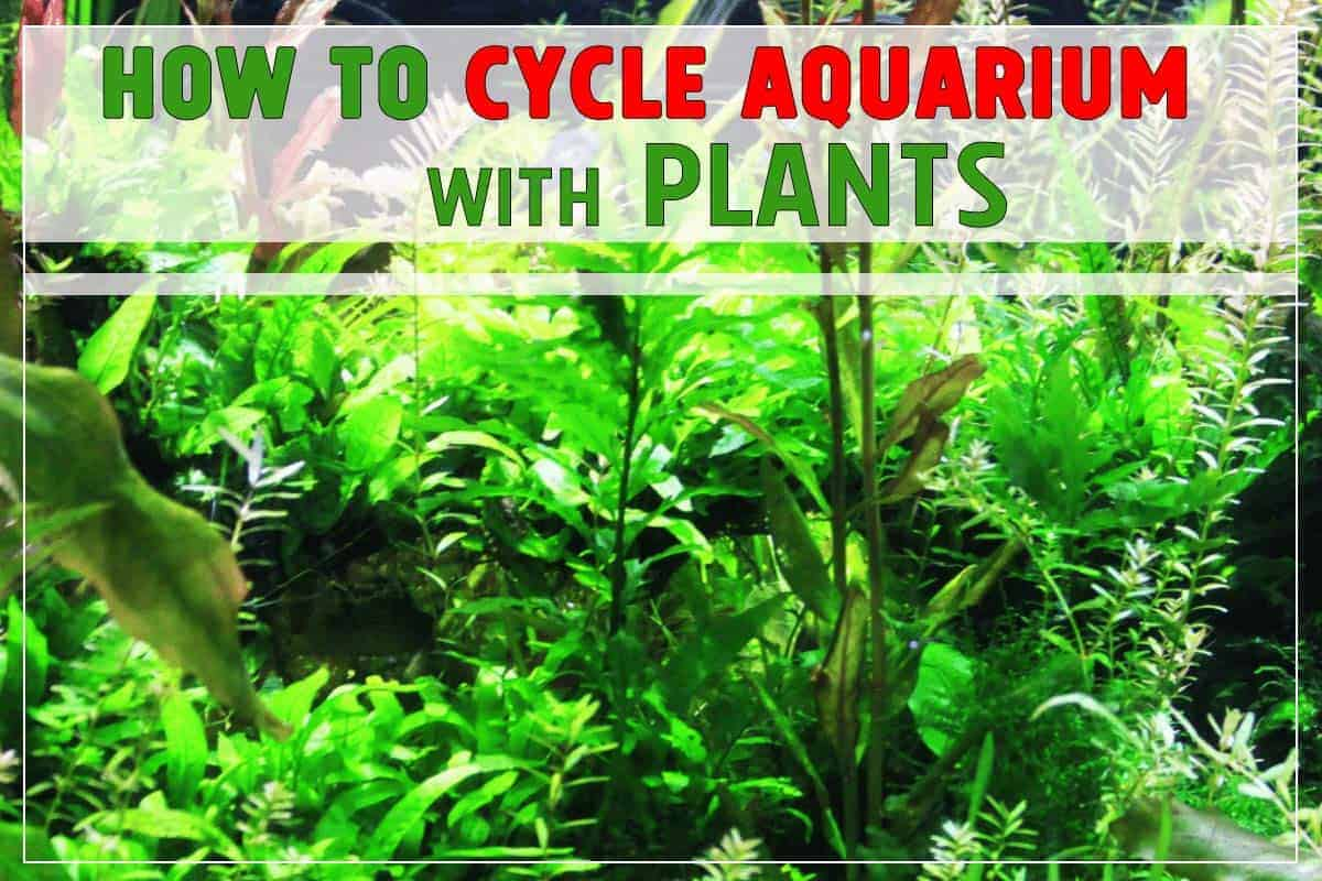 How to Cycle Aquarium with Plants